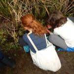 amphibia ambles2