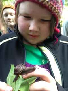 Nola & Monadenia snail