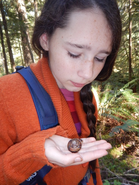 Little banded snail Species at risk... Oh! sooooo sad How can we help snails?