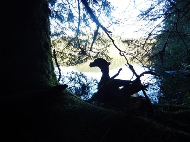 Carrington lagoon endemic woodduck